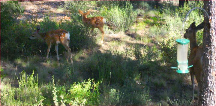 Mother deer and babies graze in the backyard of this private Sunriver lodge home for rent in Central Oregon.