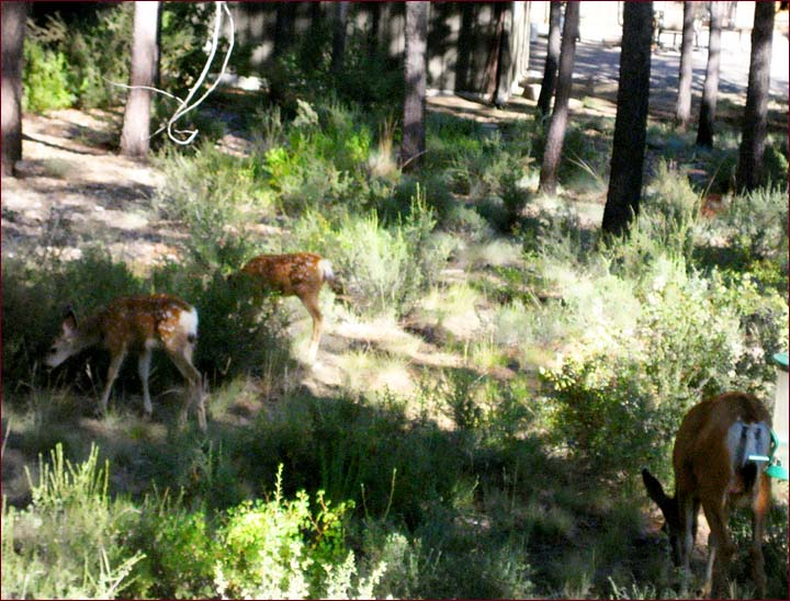 Sunriver Northwoods Lodge is surrounded with pines and wildlife.